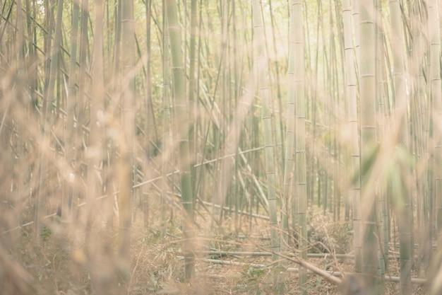 Bamboebos en groen weidegras met natuurlijk licht. Premium Foto