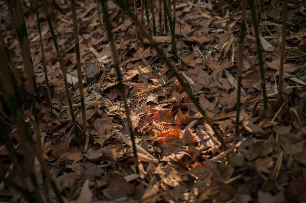 Bamboebos landschap Gratis Foto