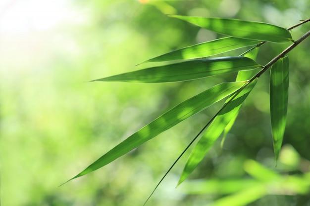 Bamboo bos. Premium Foto