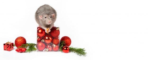 Banner. charmante rat dumbo met kerstversiering. 2020 jaar van de rat. takjes vuren, rode kerstballen. chinees nieuwjaar. Premium Foto