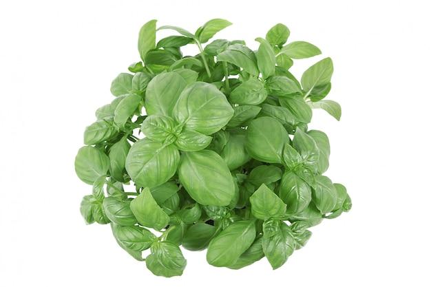 Basilicum bladeren op wit Premium Foto