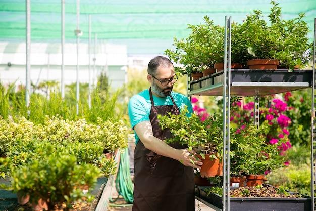 Bebaarde peinzende tuinman die pot met plant houdt en het op dienblad schikt. professionele kasmedewerker die tijdens zonnige dag met verschillende bloemen werkt. commercieel tuinieren en zomerconcept Gratis Foto
