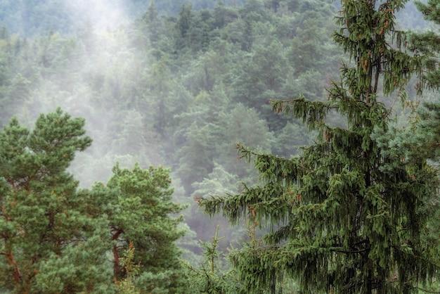 Bebost bergoverzicht in europa, mistige toppen van naaldbomen Premium Foto