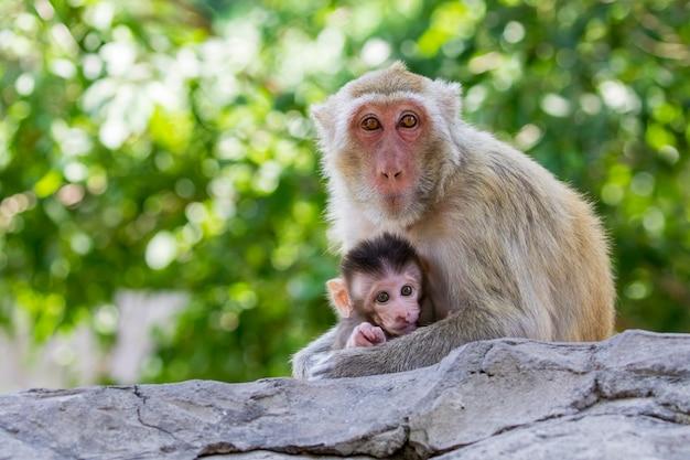 Beeld van moederaap en babyaap op aard Premium Foto