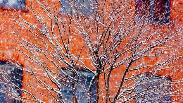 Bekijk boom witte sneeuw in het vallen. gelegen in loft-appartementen. rode bakstenen huis op achtergrond Premium Foto