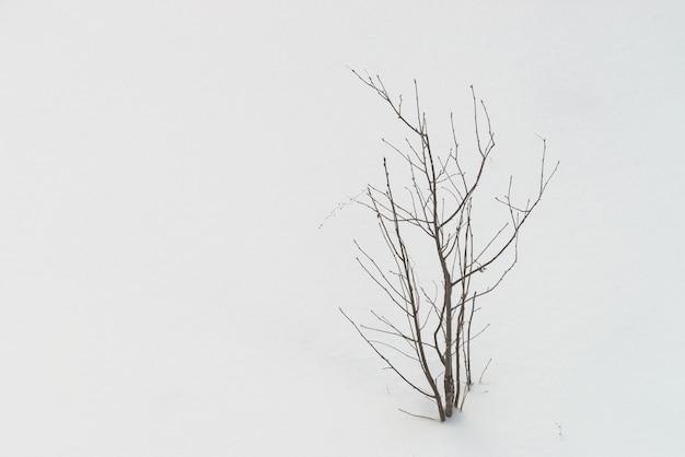 Bekijk van bovenaf op boom met gevallen bladeren op witte schone sneeuw Premium Foto