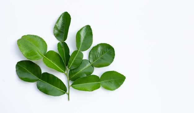 Bergamot kaffir limoenblaadjes kruid vers ingrediënt geïsoleerd op een witte achtergrond. Premium Foto
