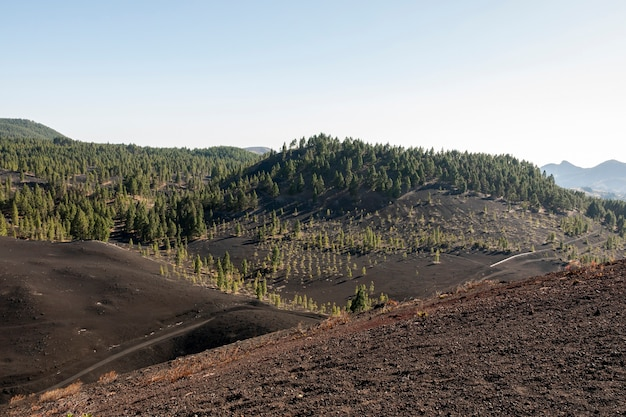 Bergbos op vulkanische grond Gratis Foto