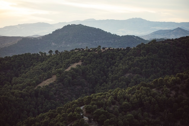Bergenlandschap met bos met mensen wordt gevuld die Gratis Foto