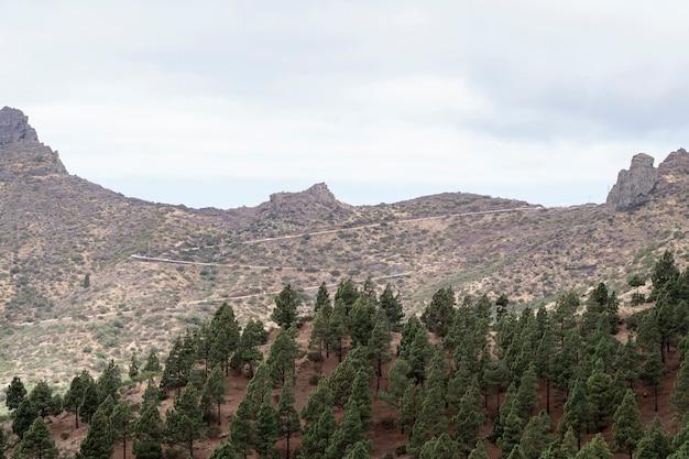 Berghorizon met bomen Gratis Foto