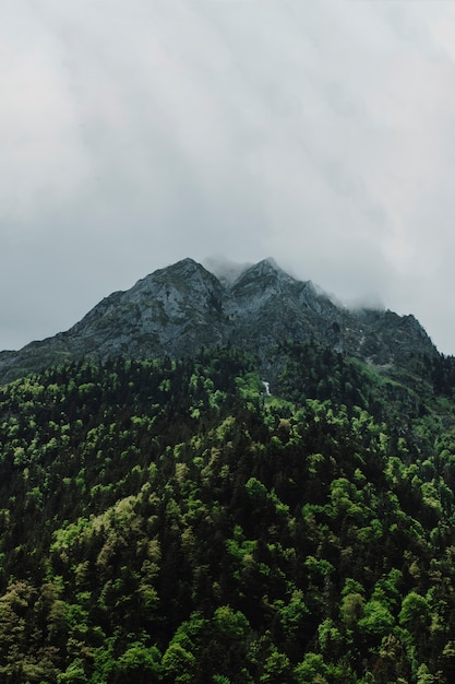 Berglandschap met groene bomen Gratis Foto
