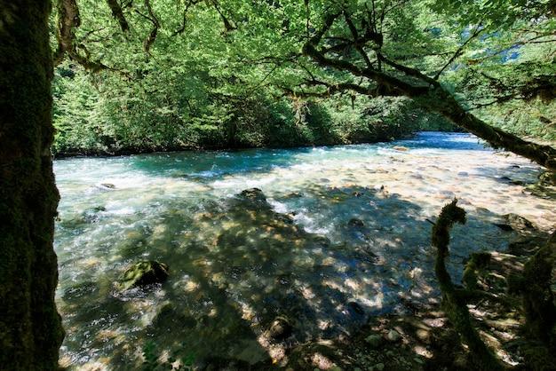 Bergrivier en bukshoutbomen op de kust in abchazië Premium Foto