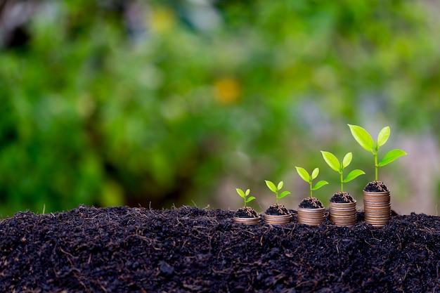 Besparingen groei concept, plant ontspruiten uit de grond Premium Foto
