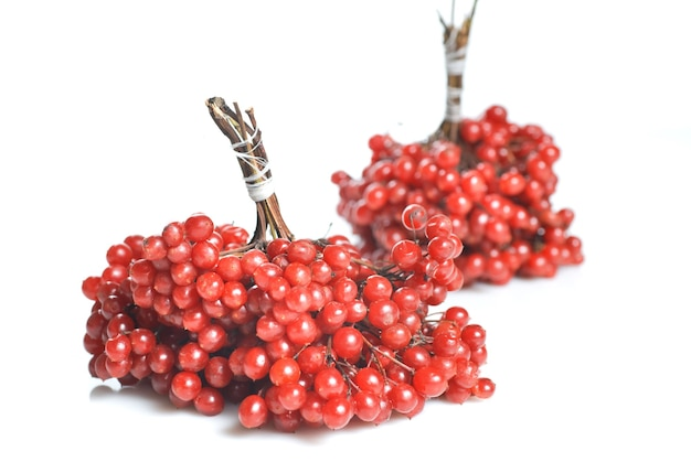 Bessen van rode viburnum Premium Foto