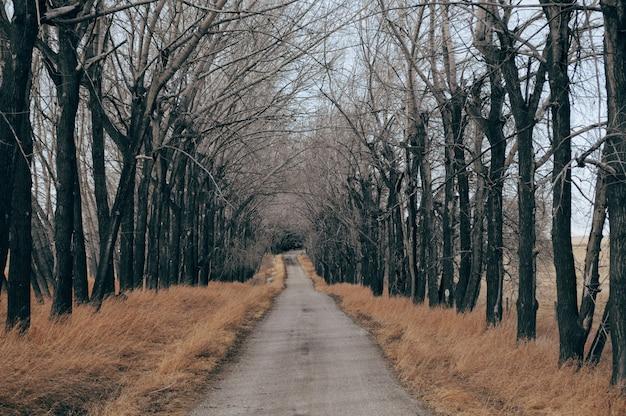 Betonnen weg omgeven door droog gras en kale bomen Gratis Foto