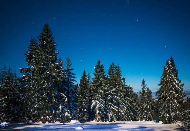 Betoverend magisch landschap van besneeuwde hoge sparren Premium Foto