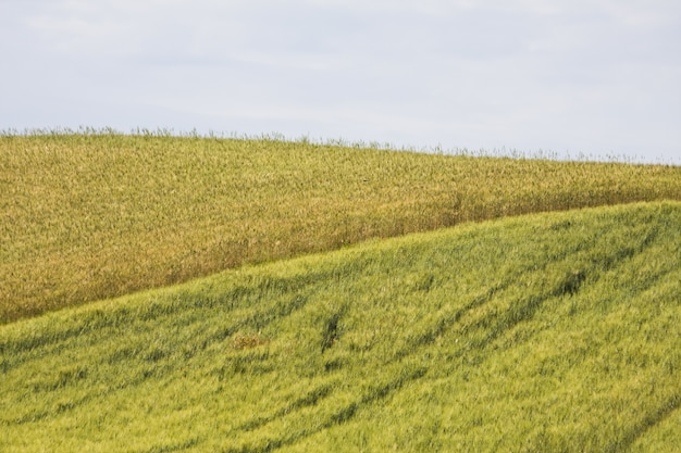 Betoverend mooi tarweveld tussen het groen onder een bewolkte hemel Gratis Foto