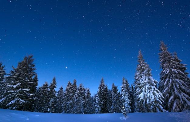 Betoverend nachtlandschap besneeuwde sparren groeien tussen sneeuwbanken tegen de achtergrond van niet-bergketens en een heldere sterrenhemel Premium Foto