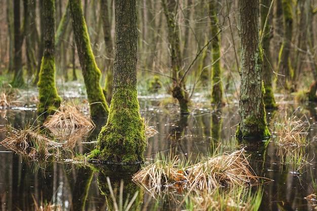 Betoverend uitzicht op de bomen en planten en de rivier in het bos-concept: mysterieus Gratis Foto