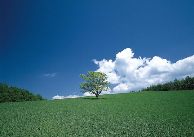Betoverend uitzicht op de eenzame boom in de groene velden onder de blauwe lucht Gratis Foto