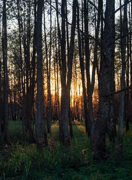 Betoverend uitzicht op de hoge bomen en het gras in het bos tijdens zonsondergang Gratis Foto