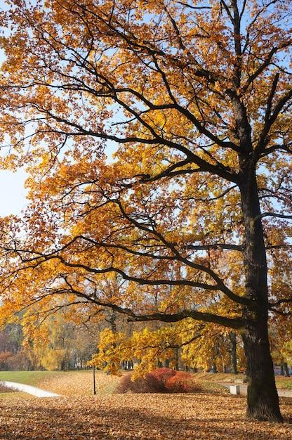 Betoverend uitzicht op de hoge boom met gele bladeren in het park Gratis Foto