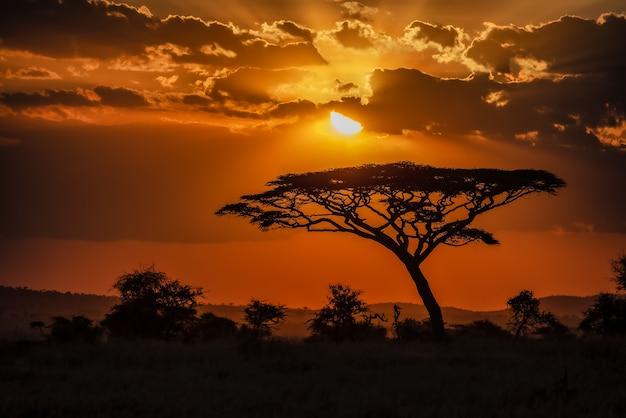 Betoverend uitzicht op het silhouet van een boom in de savannevlaktes tijdens zonsondergang Gratis Foto