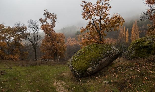 Betoverende weergave van bomen in het veld op een mistige dag Gratis Foto