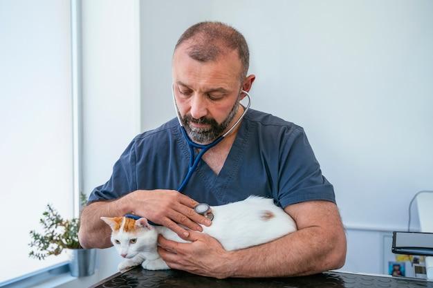 Betrokken mannelijke dierenarts die het hart met een stethoscoop controleert op een ongezonde bejaarde kat Premium Foto