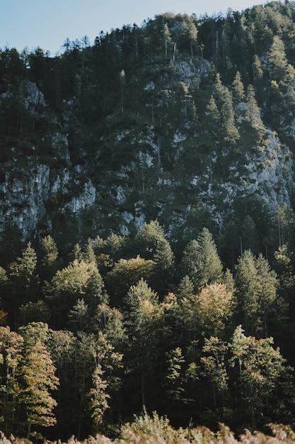 Bevroren mysterieus bos op een warme winterdag die laat zien hoe mooi de winter kan zijn Gratis Foto