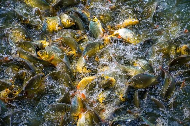 Beweging van vis. veel vis in het water. Premium Foto