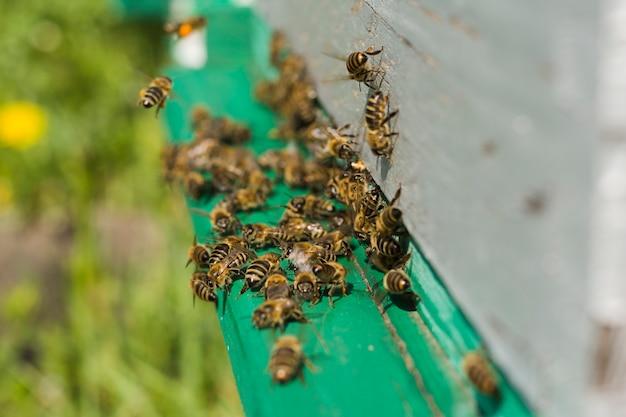 Bijen op hout Gratis Foto