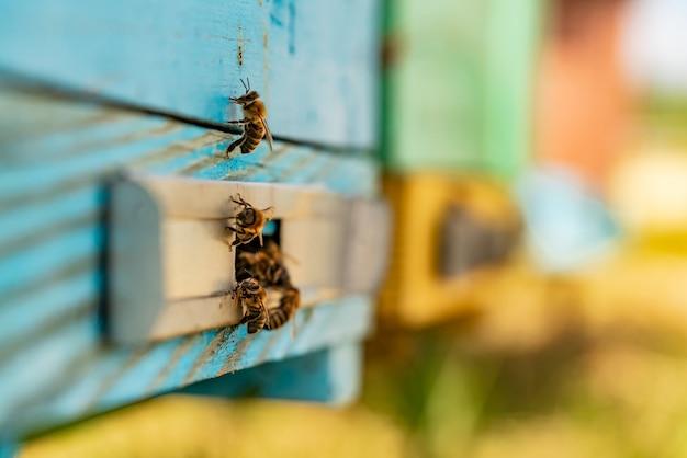 Bijen zwermen bij de ingang van de korf Premium Foto