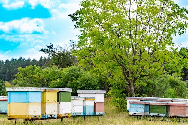 Bijenkasten in een bijenstal met bijen die naar de landingsplanken in een groene tuin vliegen Premium Foto
