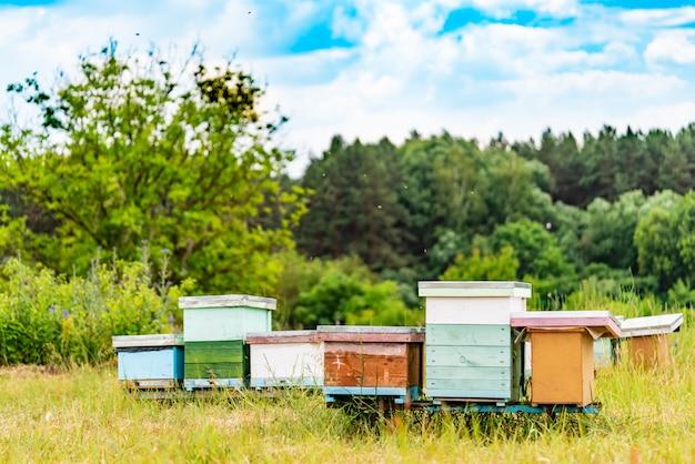 Bijenkasten in een bijenstal met bijen die naar de landingsplanken vliegen Premium Foto