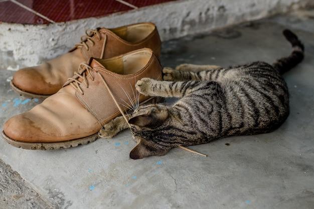 Binnenlandse schattig kitten spelen met schoenveters Gratis Foto