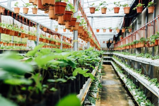 Binnenpassage van een plantenkwekerij Premium Foto