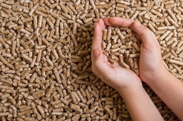 Biobrandstoffen. houtpellets in de hand Premium Foto