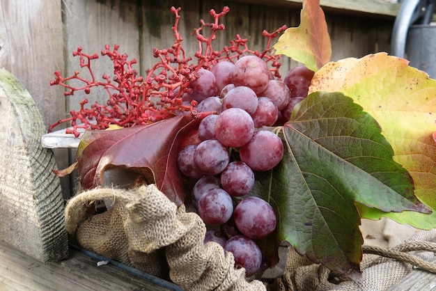 Biologisch fruit in de mand in de herfst verse druiven, in de natuur Premium Foto
