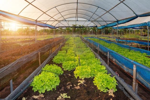 Biologische groenteboerderij Premium Foto