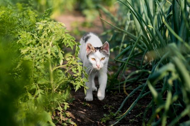 Biologische landbouw met schattige kat Gratis Foto
