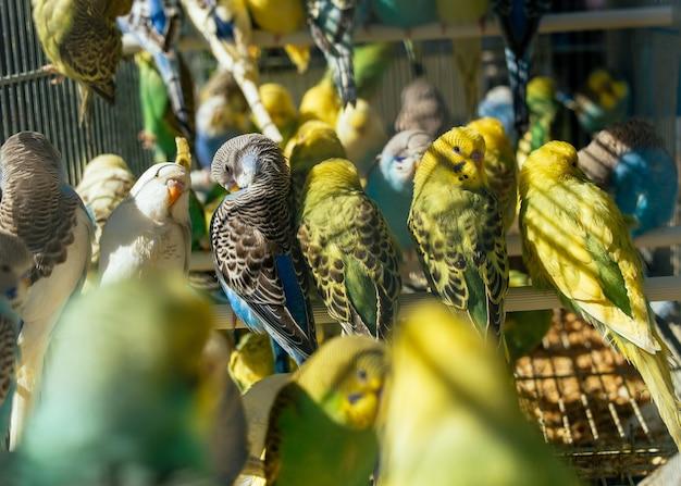 Bird market - stelletje parkieten Gratis Foto