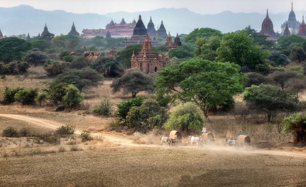 Birmaans landelijk vervoer met twee witte ossen die houten kar trekken Premium Foto