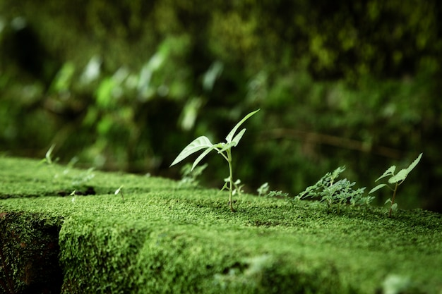 Bladeren en mos met vage achtergrond Gratis Foto