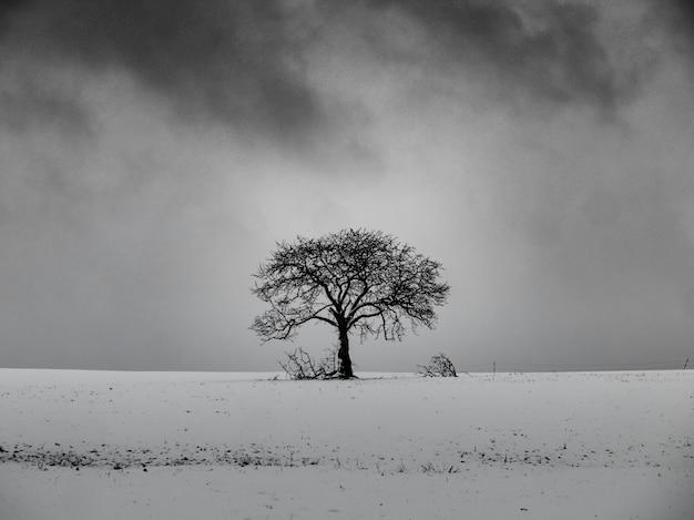 Bladerloze boom op een besneeuwde heuvel met een bewolkte hemel op de achtergrond in zwart-wit Gratis Foto