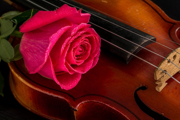 Bladmuziek voor viool en roos Premium Foto