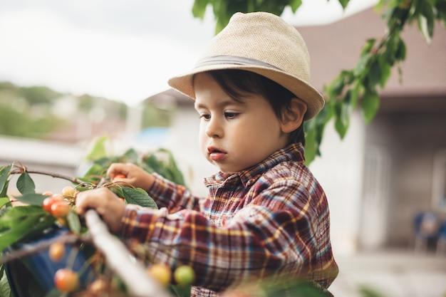 Blanke jongen die verse kersen uit de boom eet, omgeven door groene bladeren Premium Foto