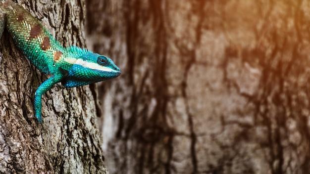 Blauw kameleon in tropisch gebied op de boom Premium Foto