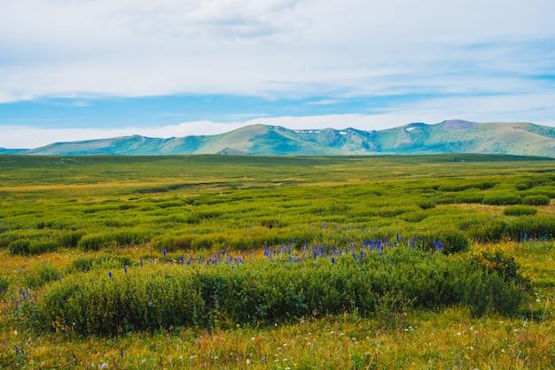 Blauwe bloemen in struiken in vallei vóór verre reuzenbergen. Premium Foto