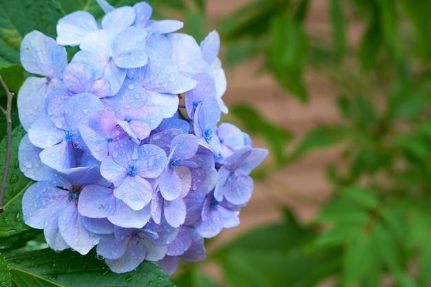 Blauwe bloemen met groene bladeren Premium Foto